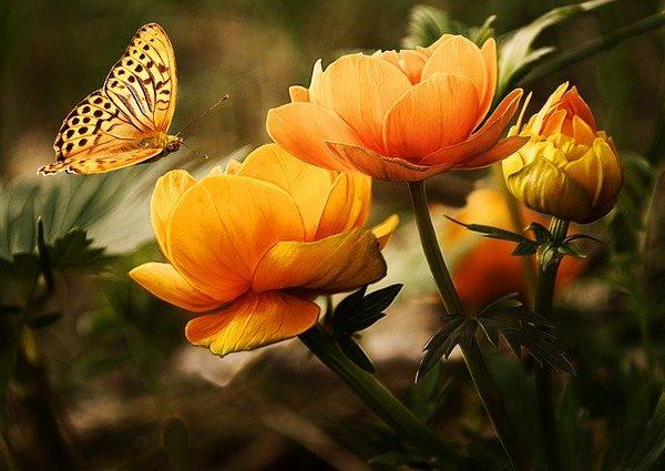 Writer Flower
