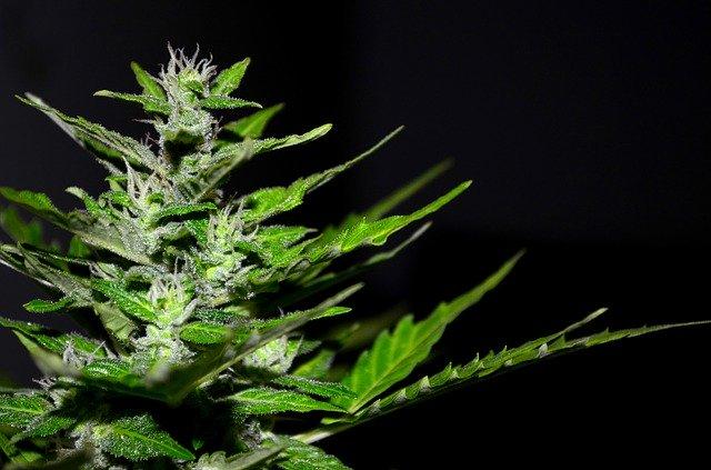 Marketing Ideas For Marijuana Dispensary